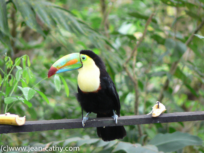 Costa Rica 2007_ (61 of 85)