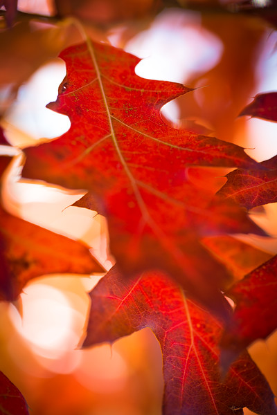 20151024-Fall Colors-69.jpg