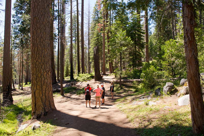 2019 San Francisco Yosemite Vacation 058 - Mariposa Grove.jpg