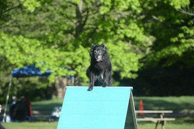Wilmington Kennel Club AKC Agility Trial May 14-15