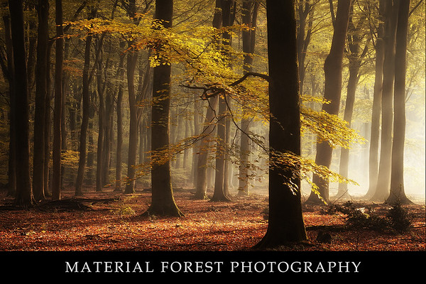 Material forest photography