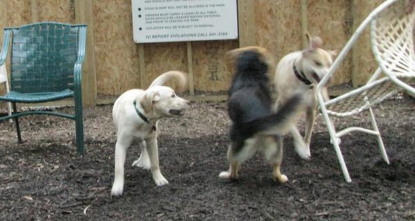 PICS JUNE 17::Fraser (puppy)