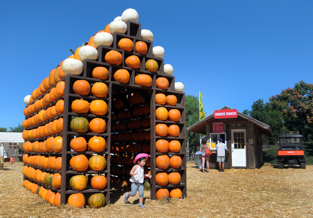 . A young girls runs out of a pumpkin house.  Underwood Family Farms in Moorpark, CA hosted its Friends of the Farm weekend, launching its Fall Harvest Festival, which runs through Halloween.  The Saturday, September 28, 2013, event benefits the Ventura County Sheriff\'s & Fire Departments.  (Photo by Dean Musgrove/Los Angeles Daily News)