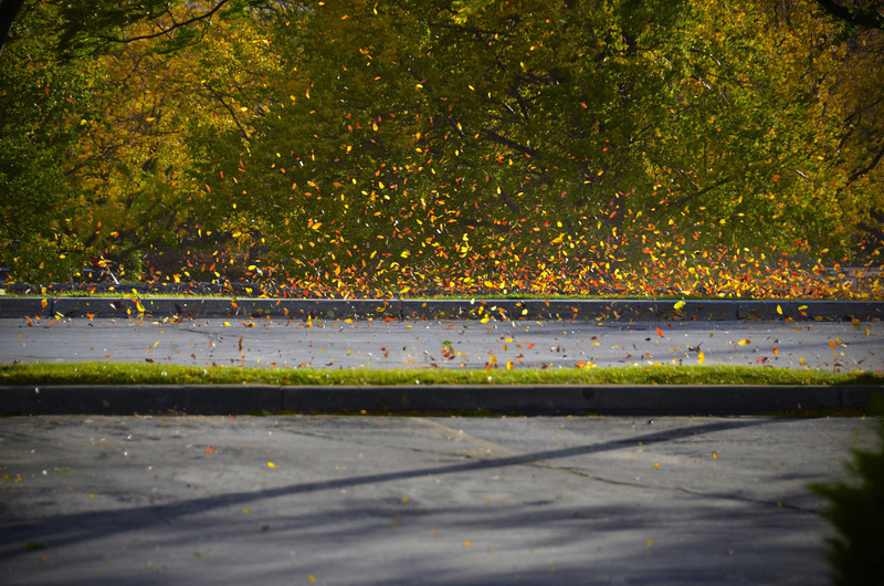 2012-10-15 ––– I walked out of the office building to go home and was met by a wild wind. I quickly pulled out my camera to try and capture the blowing leaves. It was an impressive sight.