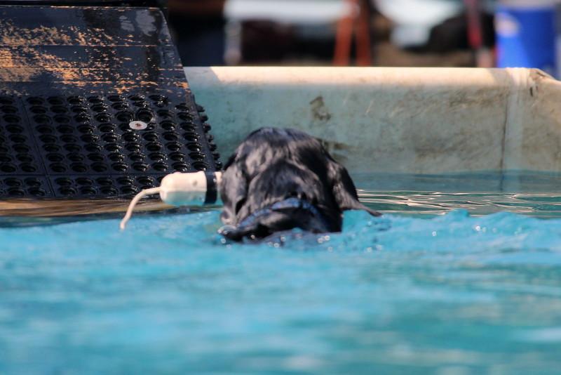Dock Dogs at Fair-149.JPG