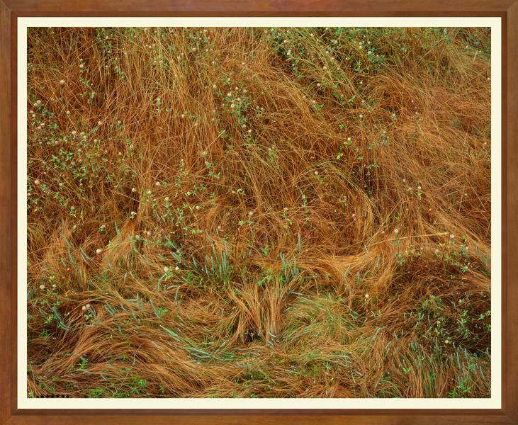 JWW 5336 GRASSES 8x10 300.jpg