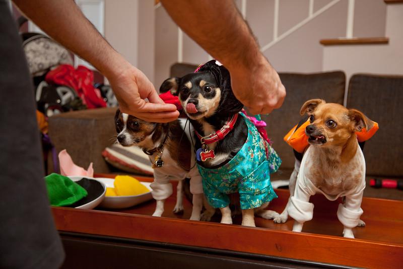 Dog-sushi-halloween-47.jpg