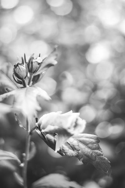 ©JENNIFERFINDLAY-29.jpg