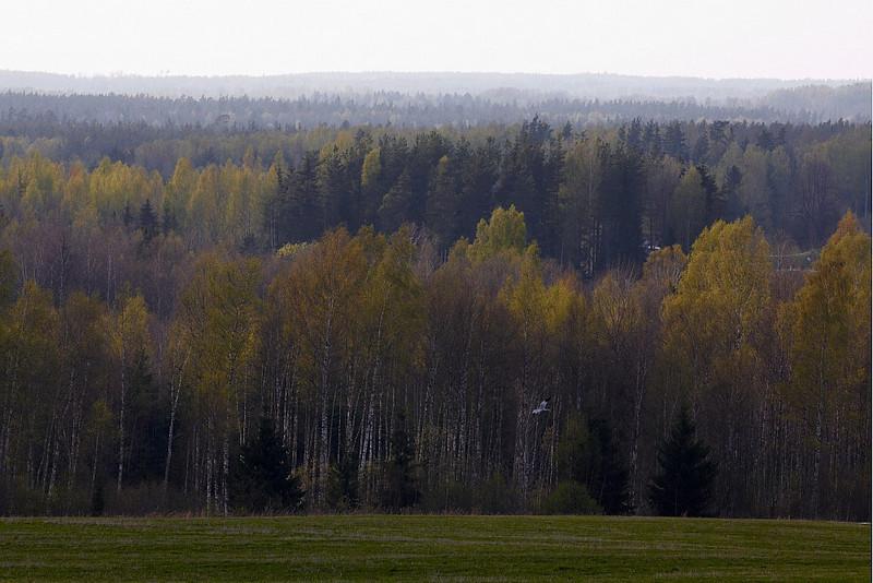 South-Estonian landscape with Marsh Harrier