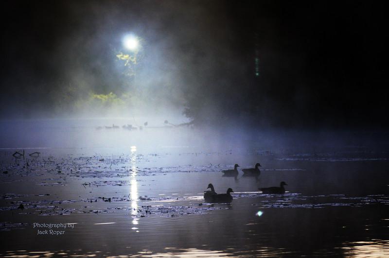 Geese in the fog  _7212 - Copy.jpg