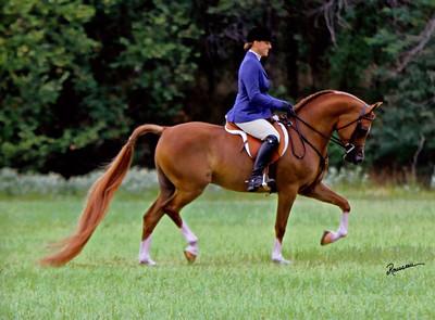 Sage Performance Horses