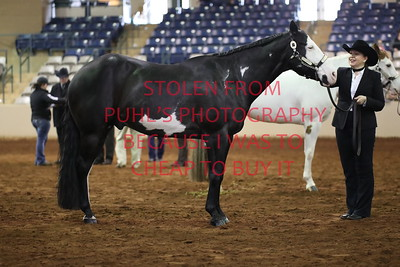27A. Grand and Reserve Geldings