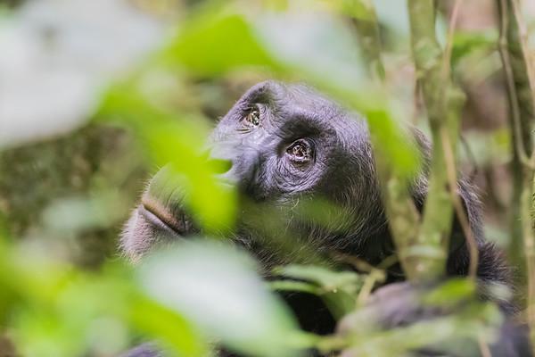 Uganda - Kibale Forest National Park