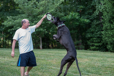 Bella Playing Frisbee
