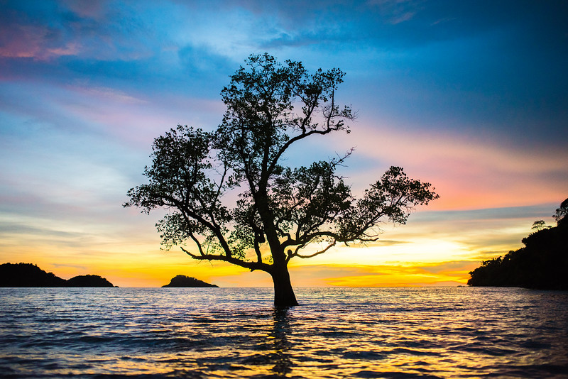 Lonely Tree    Koh Chang, Thailand