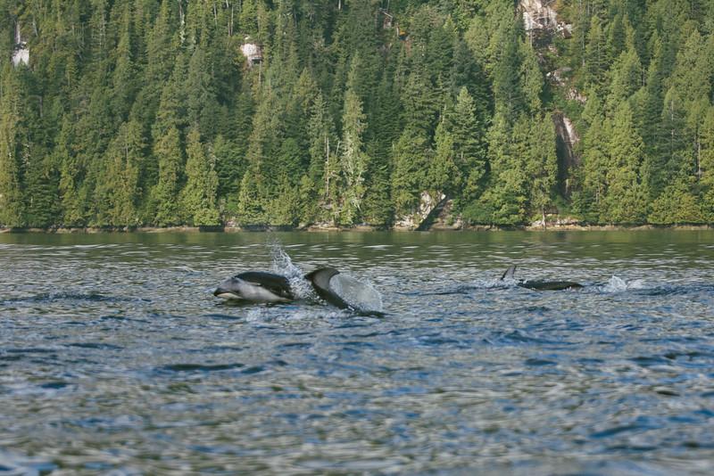 150910_Dolphin_3930.jpg
