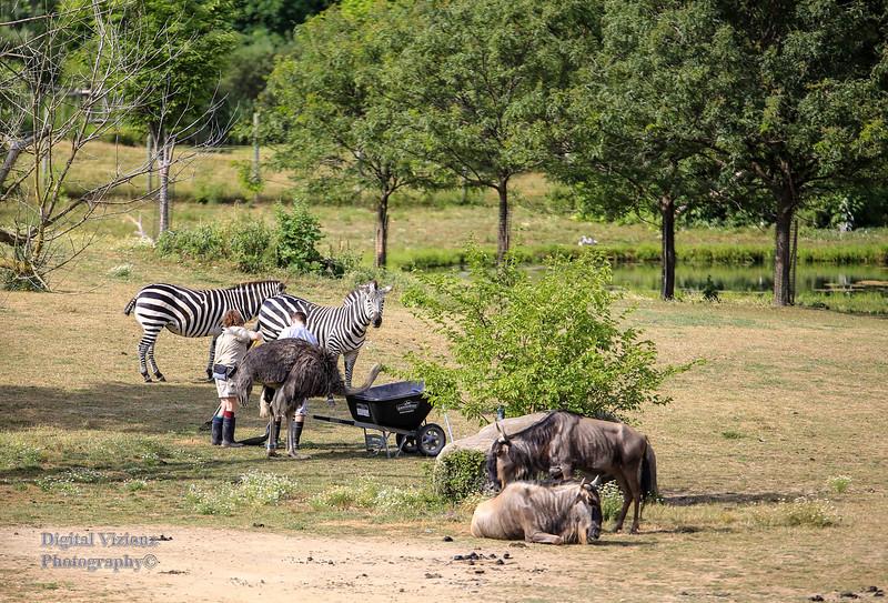2016-07-17 Fort Wayne Zoo 287LR.jpg