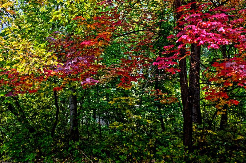 Fall_Colors_HDR6.jpg