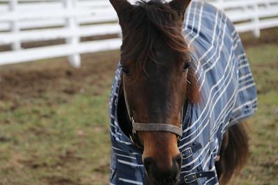 Lindy Farms 01-02-21