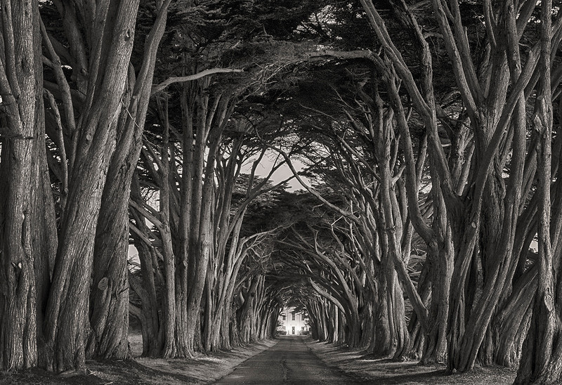 cypress tunnel bw.jpg