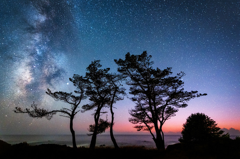 Pebble Beach Cypress & Milky Way, Sea Ranch, California