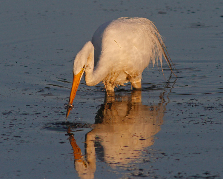 WB~Egretfishwraparoundbeak1600.jpg