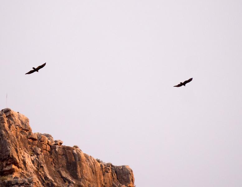 Grand Canyon-243.jpg