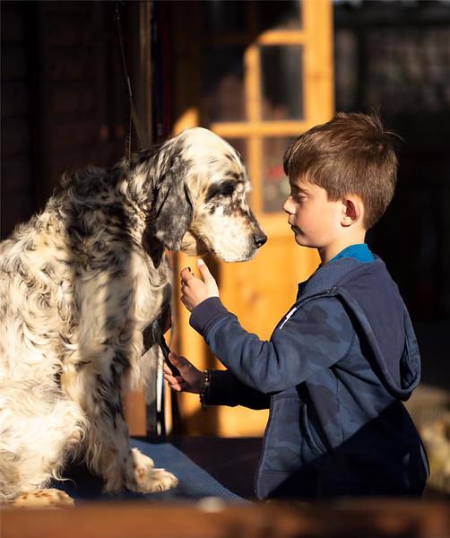 Setter dog grooming brush.jpg