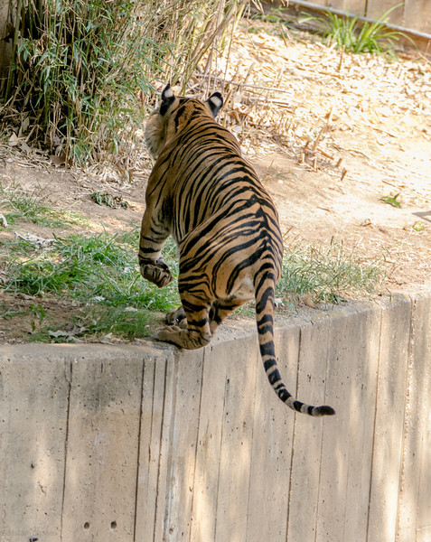 DC-Zoo-2013-2222.jpg
