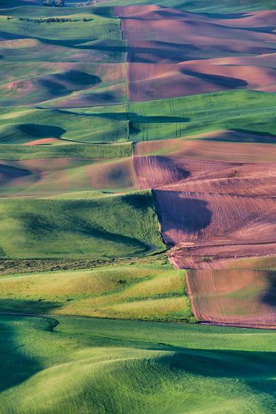 Multiple Fields of Palouse