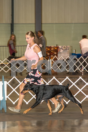 2017 Labor Day Perry Dog Show