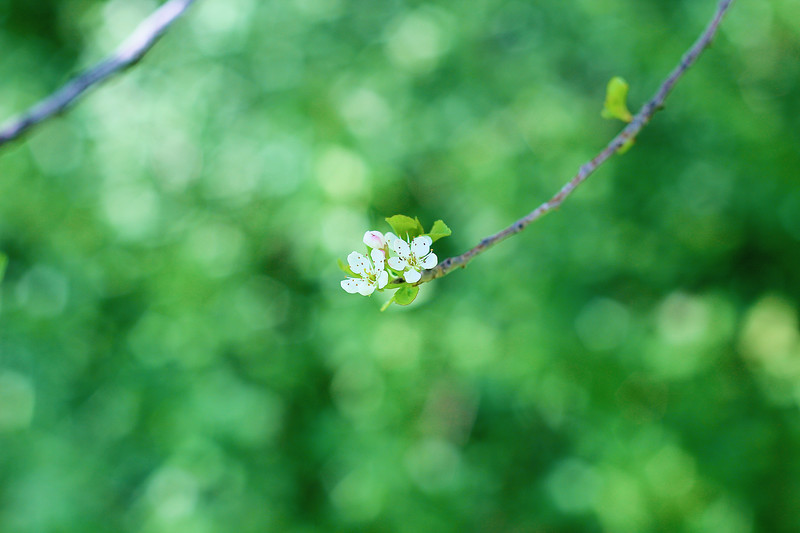 Spring Findings...