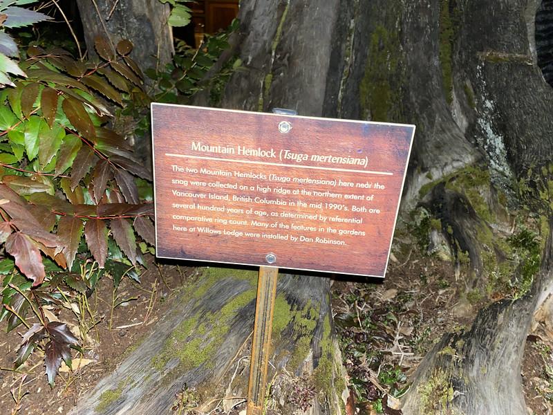 Plaque: Mountain Hemlock at The Herbfarm