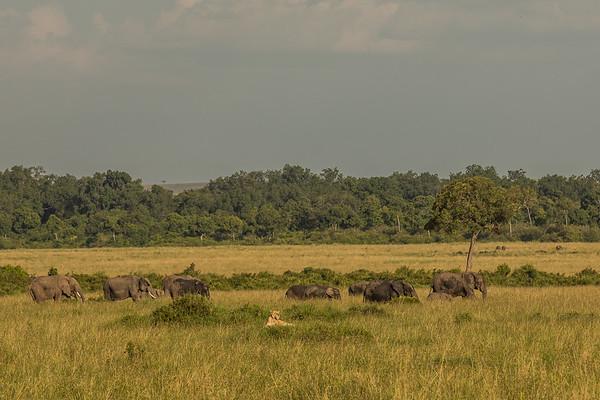 Masai Mara July 2019