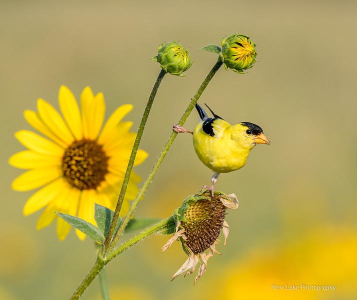 Land Birds