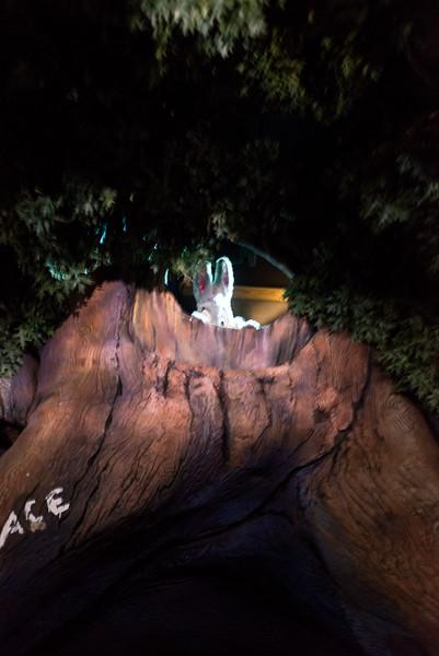 Peek-a-Boo Rabbit - Magic Kingdom Walt Disney World