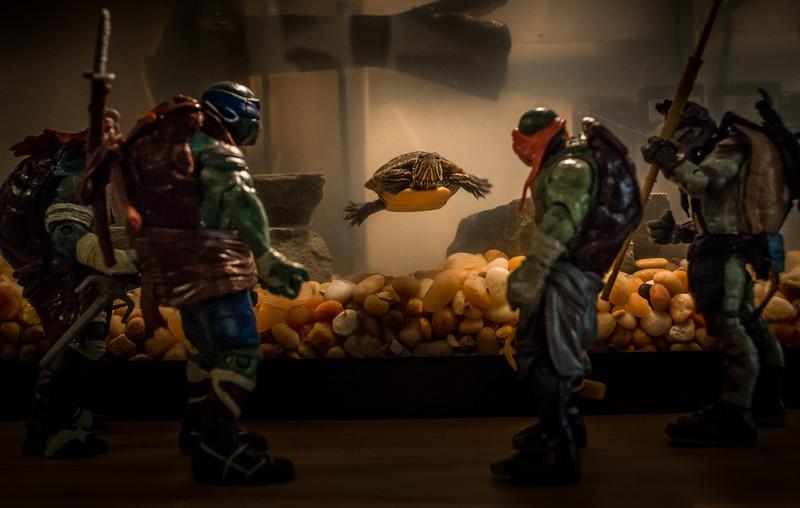 driveway ninja turtles 1 (1 of 1).jpg