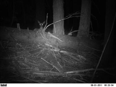 Wildlife Watchers Camera Check 8/10/11