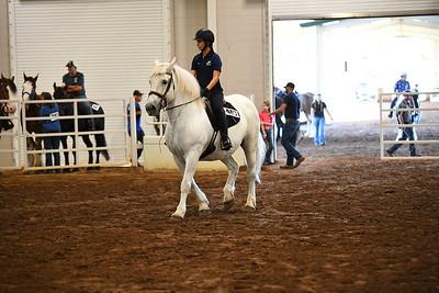 4 LD adult upstacle under saddle