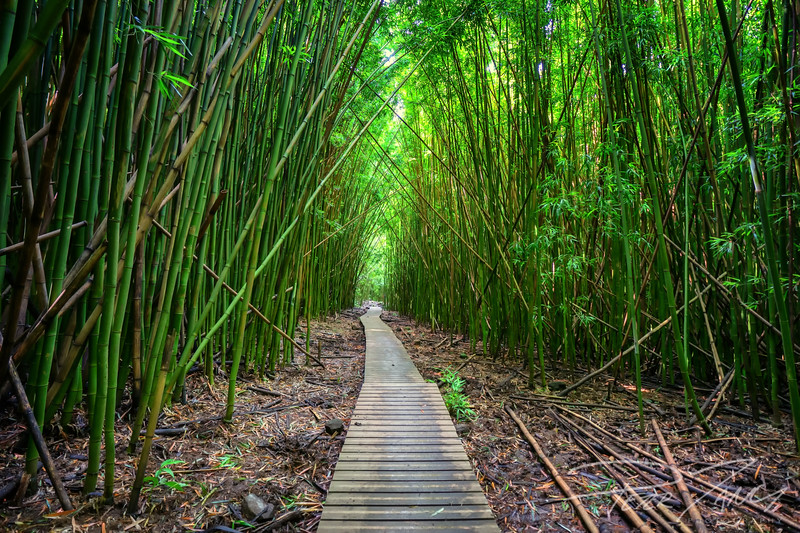 RTH- Pathway into the Bamboo Forest 6.jpg