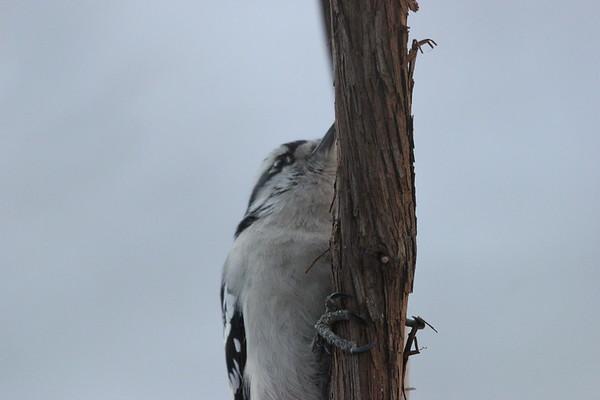 19 Mar 2021 Falaise Birds