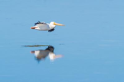Florida Wildlife and Landscapes