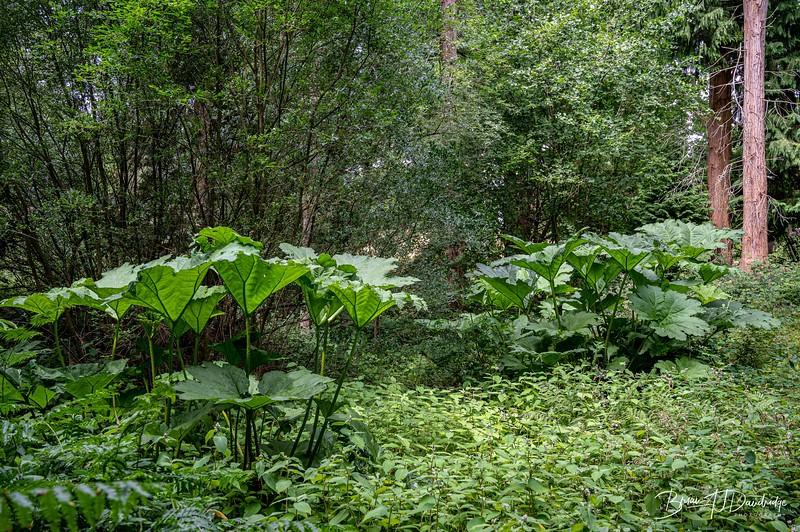 Borde Hill Z6-4752.jpg