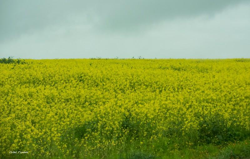 נוף צהוב.jpg