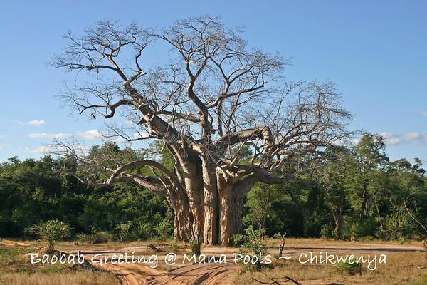 Zimbabwe-Chikwenya