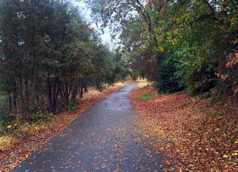 damp path.jpg