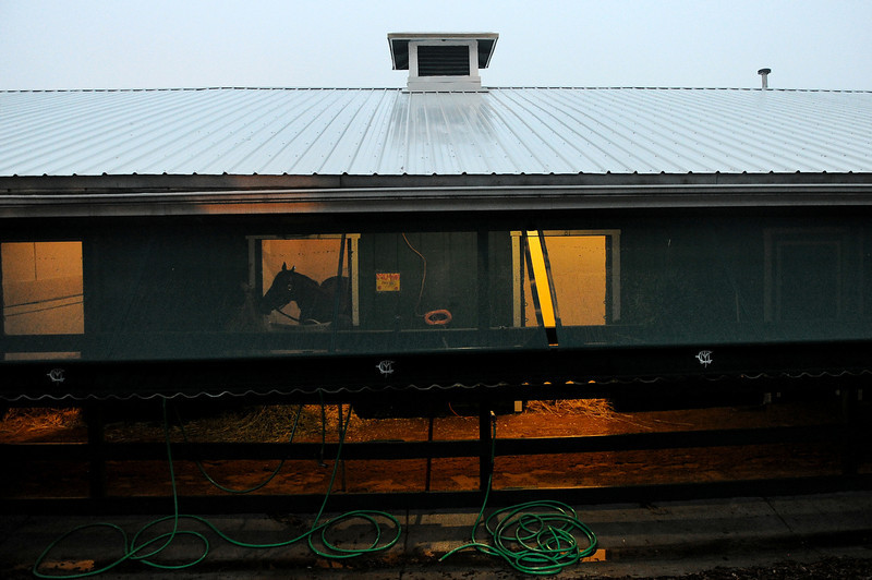 . A horse stands in a stall two days prior to the 139th Preakness Stakes at Pimlico Race Course on May 15, 2014 in Baltimore, Maryland. (Photo by Patrick Smith/Getty Images)
