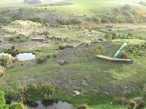 Penguin Place - Dunedin (November 6, 2004)