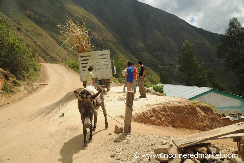 Donkey Stop - Chachapoyas to Cajamarca, Peru