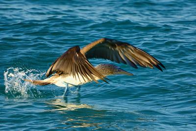 Galapagos-Birds